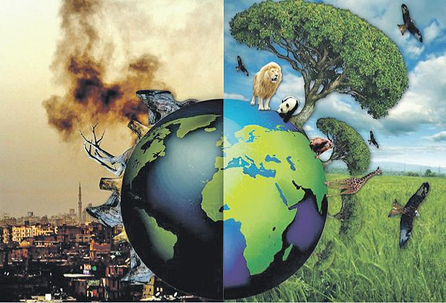 Ecology Essay